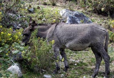 20090326143127-burros.jpg